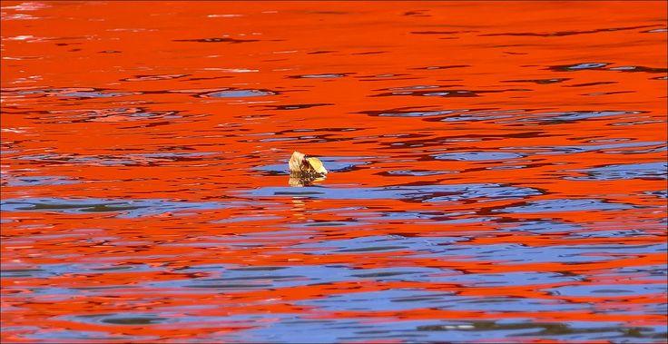 Zomaar een blaadje bij de Hobbemakade in Amsterdam... in de weerspiegeling van een rode sloep...
