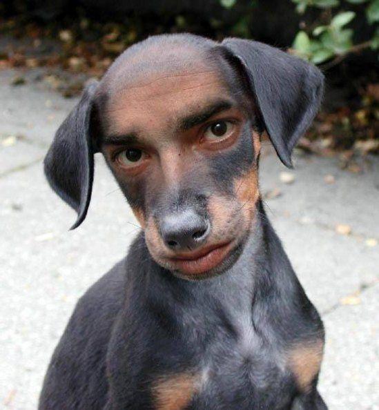 Galeri 15 Gambar Anjing Lucu Di Dunia | Gambar Pemandangan Indah