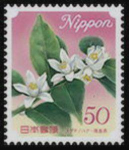 Flower of Citrus Sudachi - Tokushima Prefecture