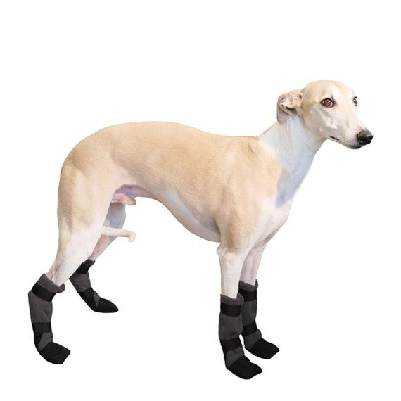 Best 25 dog booties ideas on pinterest dog boots boots for whippet dog booties dog shoes dog booties dog clothing ccuart Images