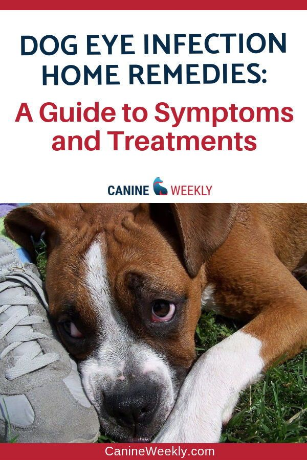 Common Eye Problems In Dogs Common Eye Problems Dogs Eyes