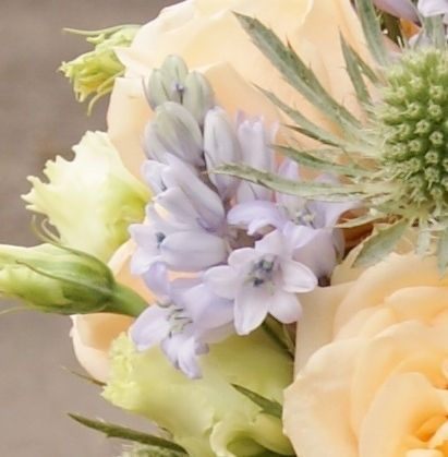 Florissimo - Flowers for weddings and events in Shropshire. SCILLA (BLUEBELL), APR-MAY. From Florissimo Flower Directory at https://uk.pinterest.com/ByFlorissimo/flower-directory/   Blue