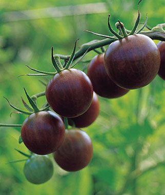 Heirloom Seeds - Vegetable Seeds and Plants, Tomato, Black Cherry at Burpee.com