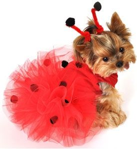 This is Sherly in a Ladybug Tutu!!!