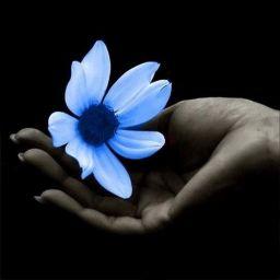 Avec le Code RESEAU15 Profitez de 15% de réduction rubriques  fleurs stabilisées et plateaux http://www.artifleurs-fleurs-artificielles.com/