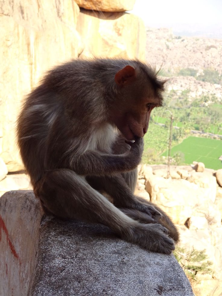 Monkey temple, Hampi, India.