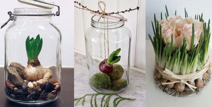 Afbeeldingsresultaat voor bloembollen in glazen vaas