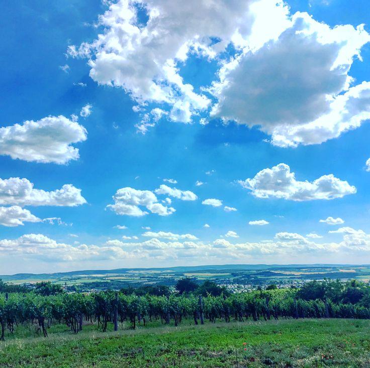 Machán-Csetvei Krisztina Mindenhol jó, de legjobb Móron A képet a Vénhegyen sétálva készítettem. Több kép Krisztinától: https://www.facebook.com/welovemor