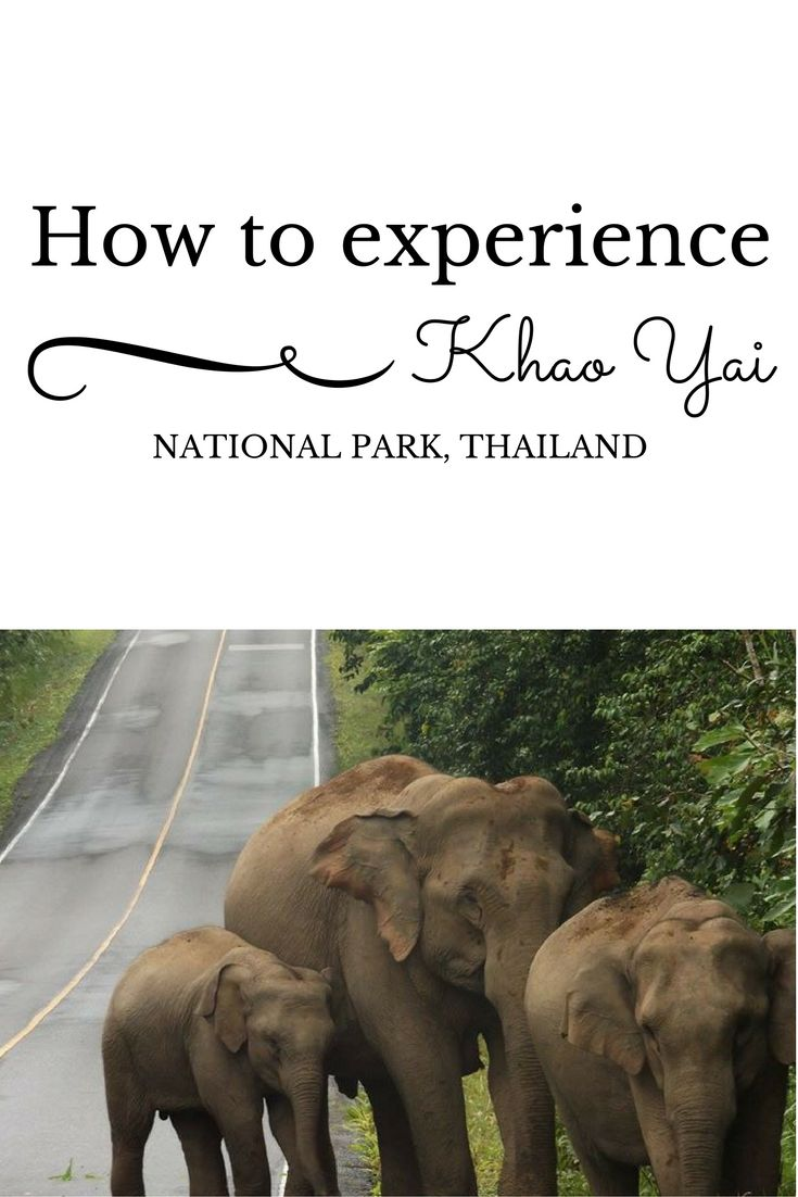 All about Khao Yai national park, Thailand - how to get there, where to stay and what trips to do.