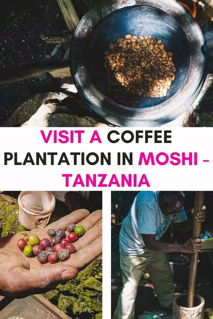 Take a Kilimanjaro Coffee Tour in Moshi Marangu Coffee
