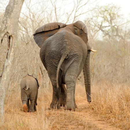 Africa | Mother elephant with her baby, captured in Sabi Sand Game Reserve, South Africa | © Arthur Batenburg