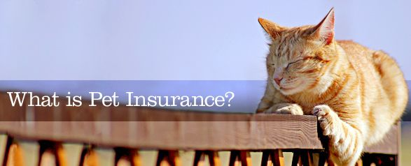What Is Pet Insurance and Who Needs It?