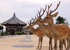奈良 鹿 - Google 検索
