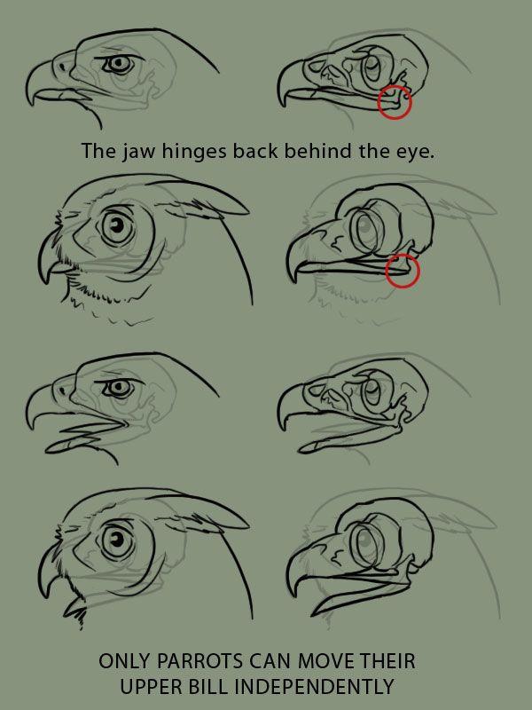 Animais. Pássaro.