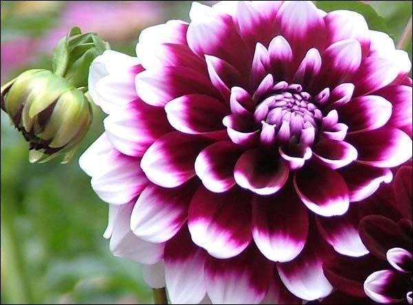 76 best images about fleurs on pinterest | champs, water lilies