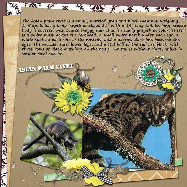Asian-Palm-Civet