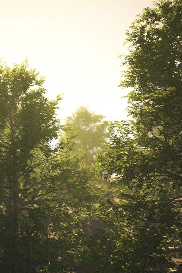 Devin Taylor Nec On Twitter Landscape Trees Landscape Landscaping Trees