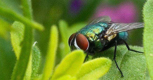 Voici nos 13 astuces naturelles pour définitivement chasser les mouches de votre maison.  Découvrez l'astuce ici : http://www.comment-economiser.fr/trucs-debarrasser-tuer-mouches.html