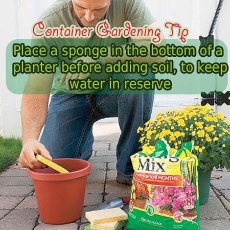 Place a sponge in the bottom of the planting pot before adding soil. The sponge will hold water just in case you forget to water plant for a day or two -