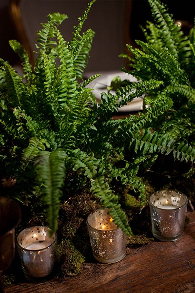 inexpensive fern centerpieces