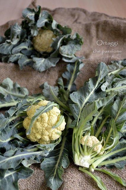 Broccolo di Bassano - ricette -   Cauliflower - recipes