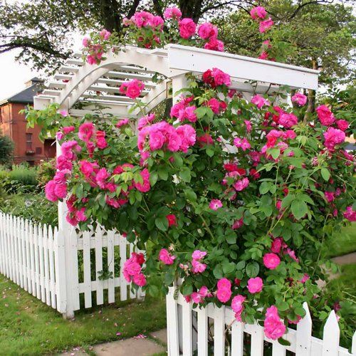 17 best images about pergola pictures arbors and trellis for Rose garden design