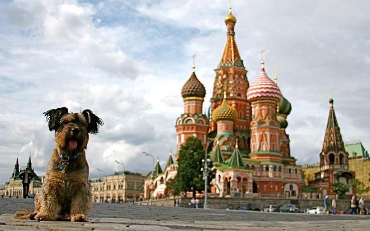 Oscar in Russia