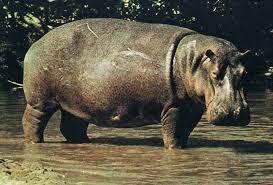 ZOOSAFARI lago dei grandi mammiferi