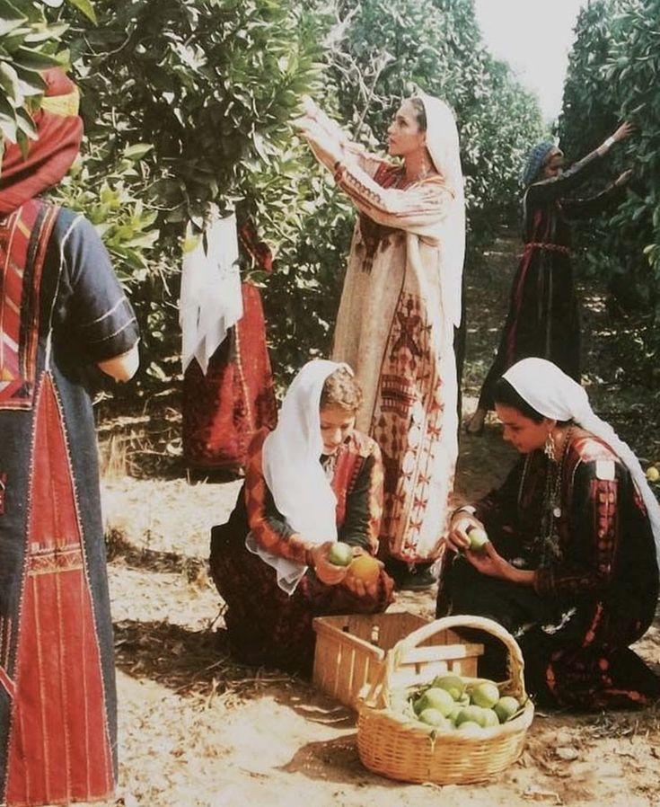 Palestinian women picking olives   Palestine art, Arab