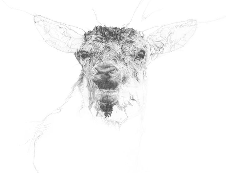 Large Drawing Print, Deer Drawing, Fine Art Print, Pencil Artwork by NordicFawn on Etsy