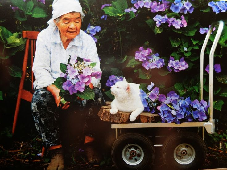 flowers cat Misao and fukumaru