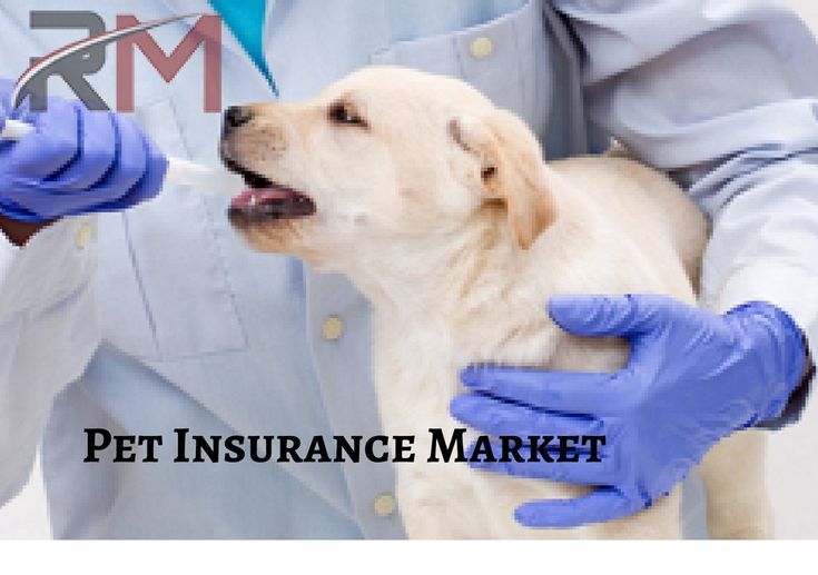 Pet insurance is a type of specialty property and casualty