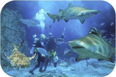 Scuba World in Mooloolaba, Sunshine Coast, Australia | Diving. Theres lots to explore under water too!  #airnzsunshine