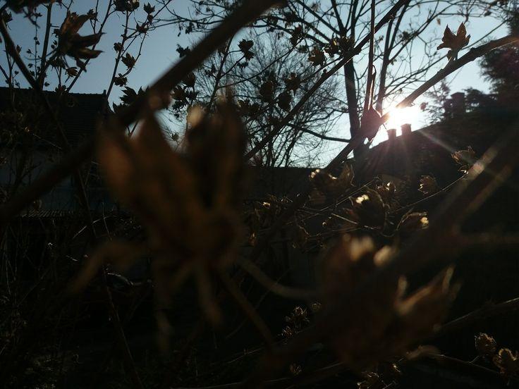 Sunshine before SPRING