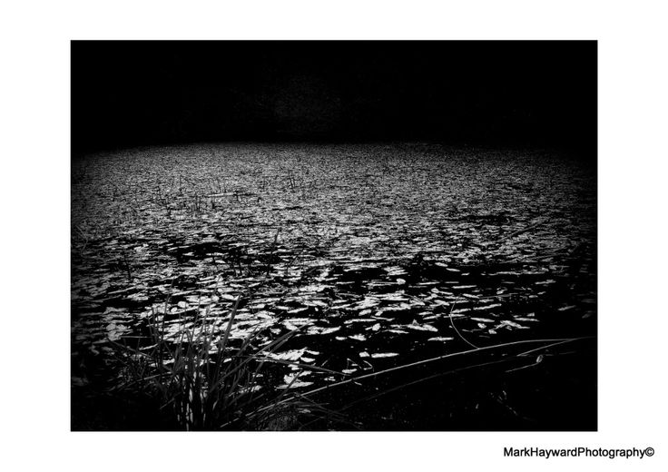 Spirit Of Dark Water  The surface of the deep pool, in the Lordswood, Chew Valley