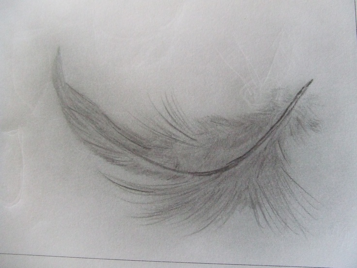 Feather pencil sketch Catherine Sothern