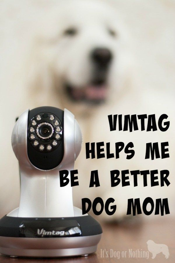 Are you worried about your dog during the day or simply curious as to how they spend their time? Click through to read why we prefer a Vimtag camera to keep track of our furbabies!