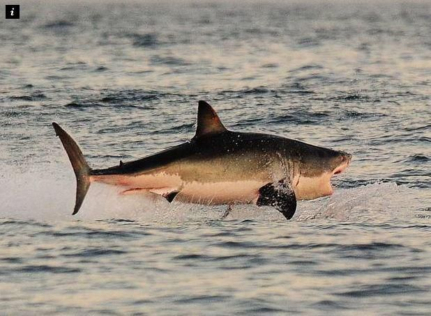 Turns out sharks love death metal (because it reminds them of struggling fish) \m/ http://grnpc.org/IgtTi