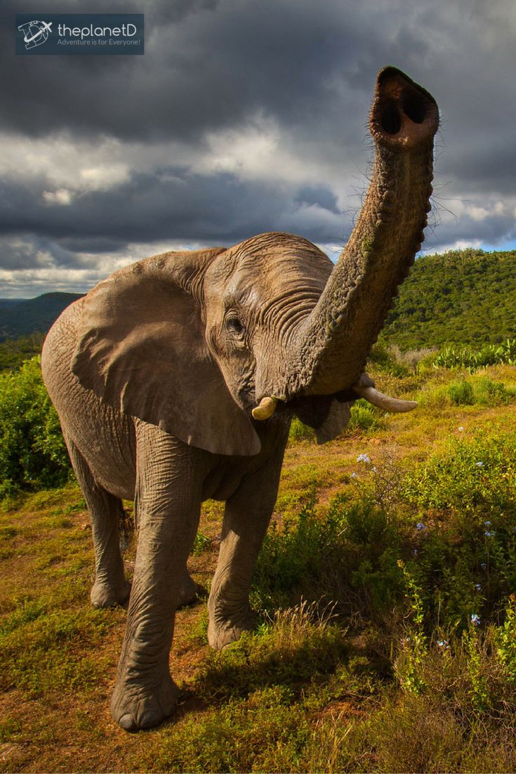 244 best Hip South Africa Travel images on Pinterest | Africa ...