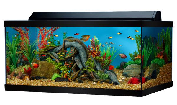 Image result for coolest 75 gallon fish tank decorations | Fish ...