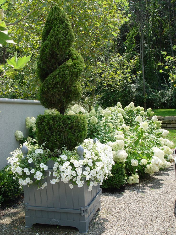 topiary juniper and white petunias. Thinking this would look lovely on each side of my garage door