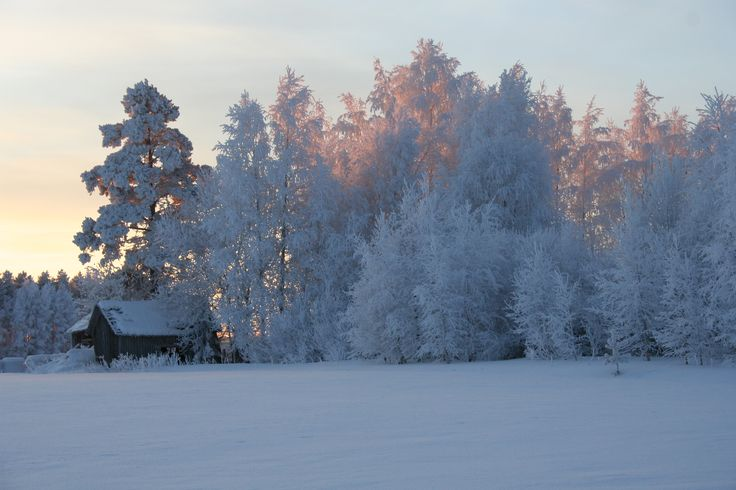 Frost. Finland, winter 2015.