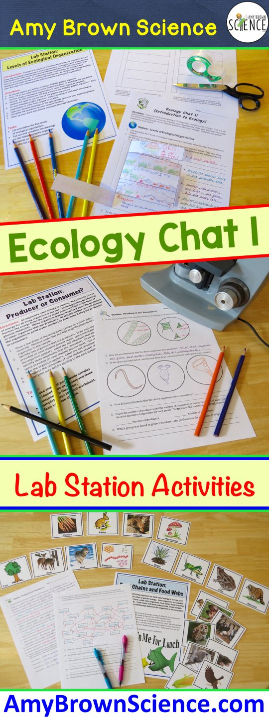 "My ""chat"" lab station activities allow students to work in cooperative groups while learning the important concepts.  Ecology chat has 9 lab stations that cover food chains, food webs, greenhouse effect, ozone depletion, biotic and abiotic factors, and much more!"