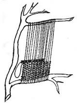weaving in between branches