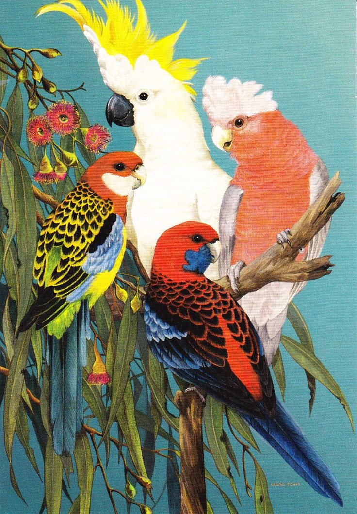 Sulphur-Crested Cockatoo, Eastern Rosella, Galah and Crimson Rosella Artwork by Marg Towt