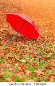 Bildresultat för orange autumn leaves fog