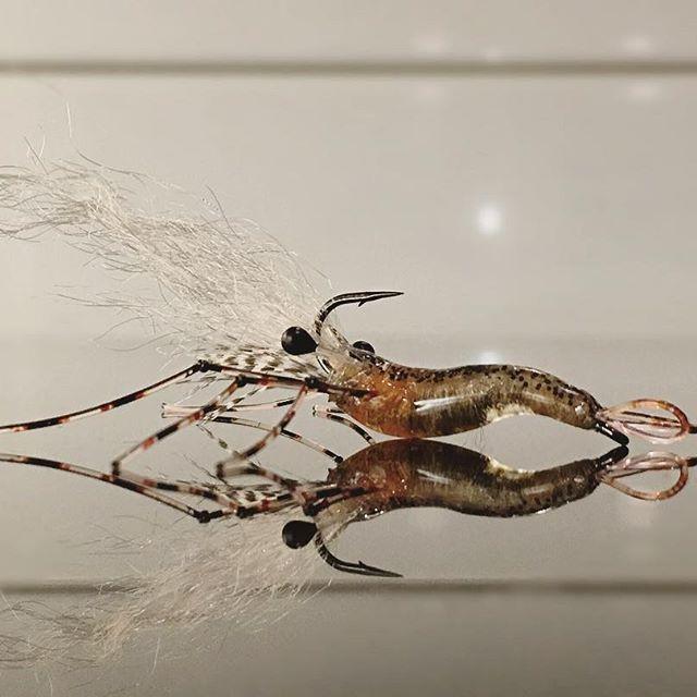 #bioshrimp #flyfishing #flugfiske #flytying #flugbindning #seatrout #coastalflyfishing