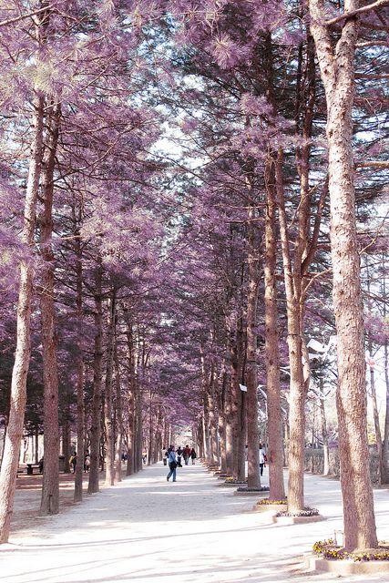 Nami Island, South Korea (Looks like a very romantic place :D! )  pernah untuk syuting Drama Korea diantaranya That Winter The Win Blows dan Winter Sonata :)