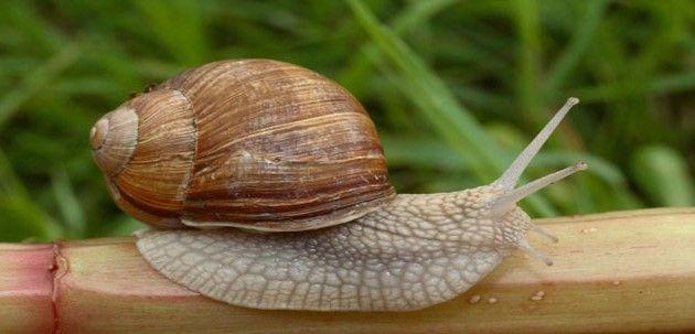 ¿Quieres saber cómo viven y se reproducen los caracoles? Descúbrelo en la Granja de caracoles de Barcelona