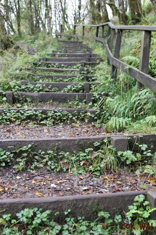 Queen Elizabeth Forest Park